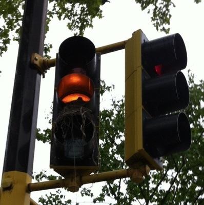 trafficlightbirdsnest