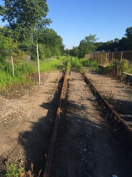 Weedy tracks