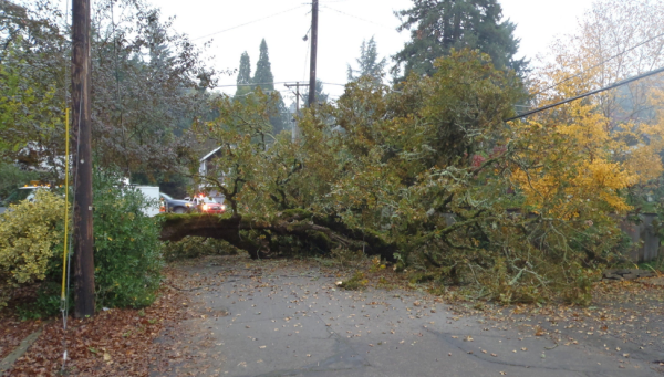 DOWNED TREE TRAPS MORE THAN 50 HOUSEHOLDS  Image from The Oregonian (Florip, 2010)